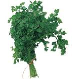 Grow your own herbs - Chervil - Anthriscus cerefolium
