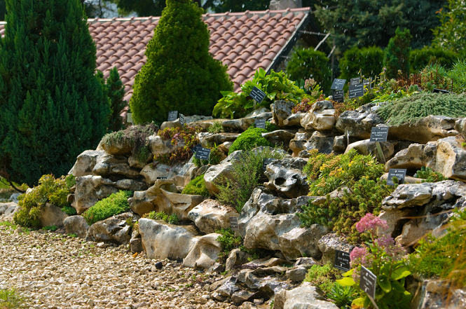 Alpines Rock Gardens Amazing Alpine Garden Design